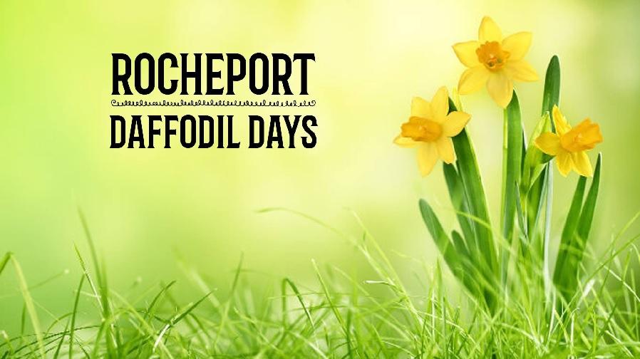 Rocheport Daffodil